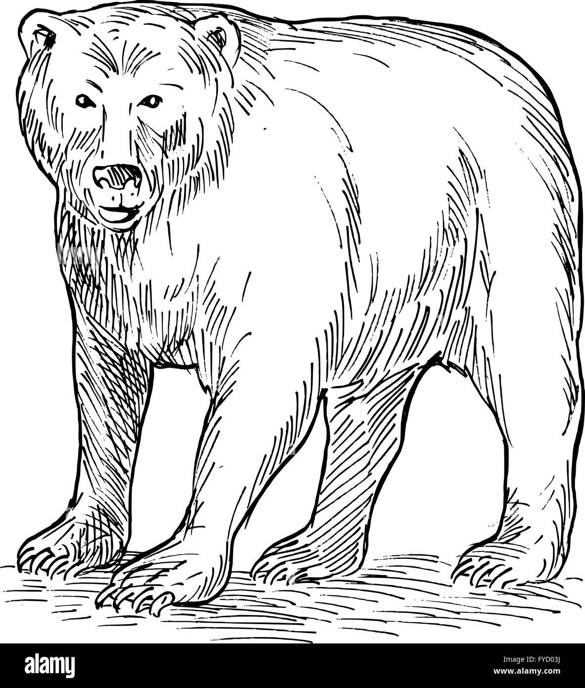 Bear Drawing Imágenes De Stock & Bear Drawing Fotos De Stock - Alamy
