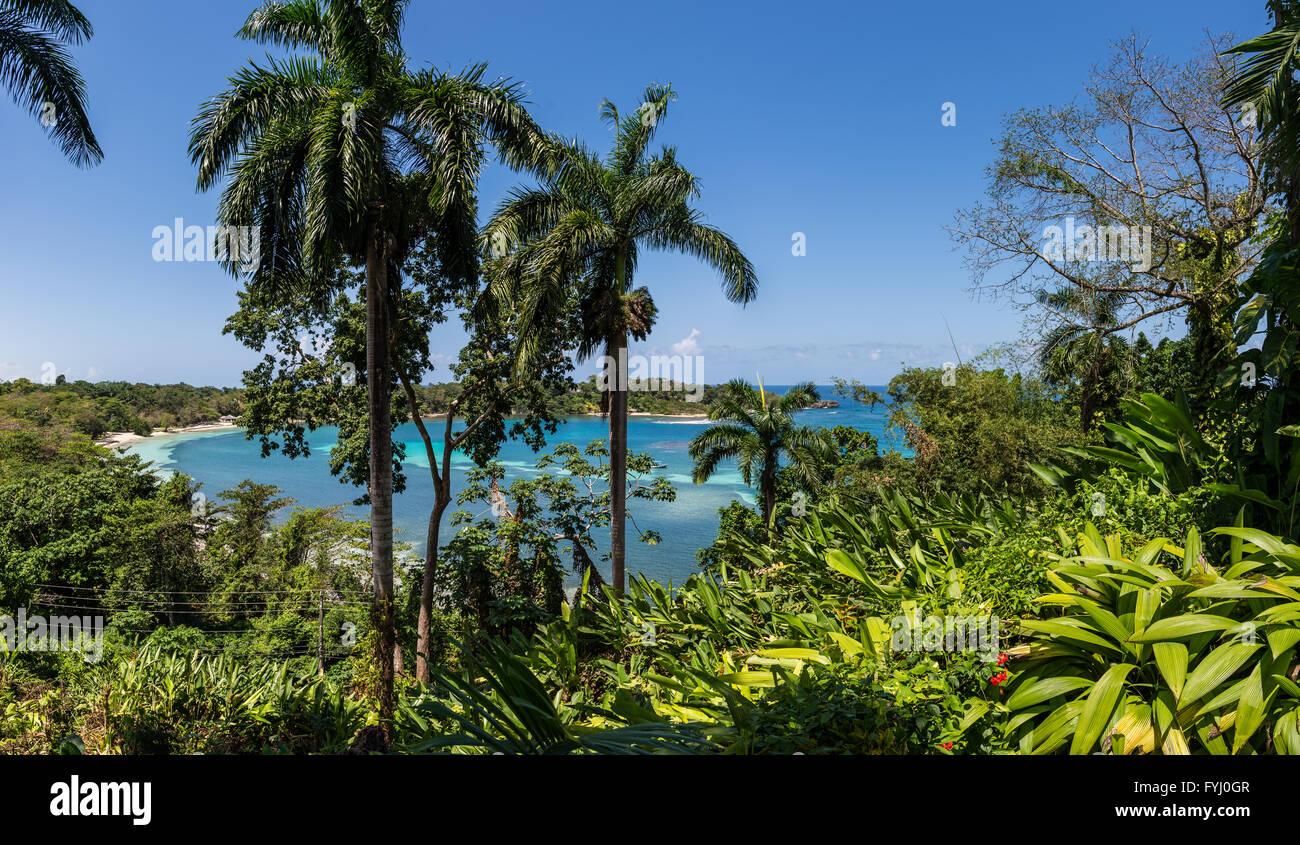 Las Palmeras contra agua azul en la isla de Jamaica, Caribeños. Imagen De Stock