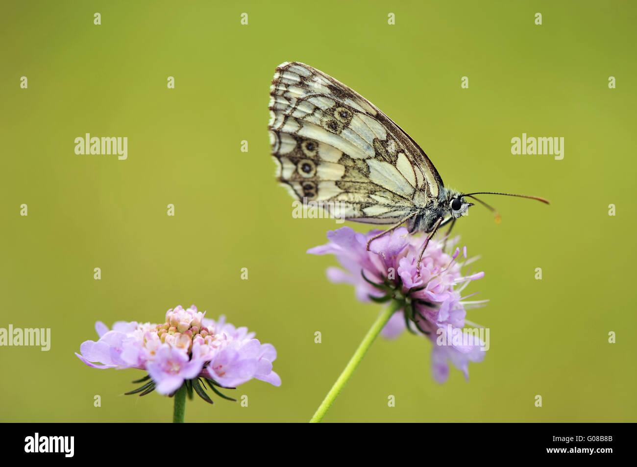De mármol blanco en flor Foto de stock