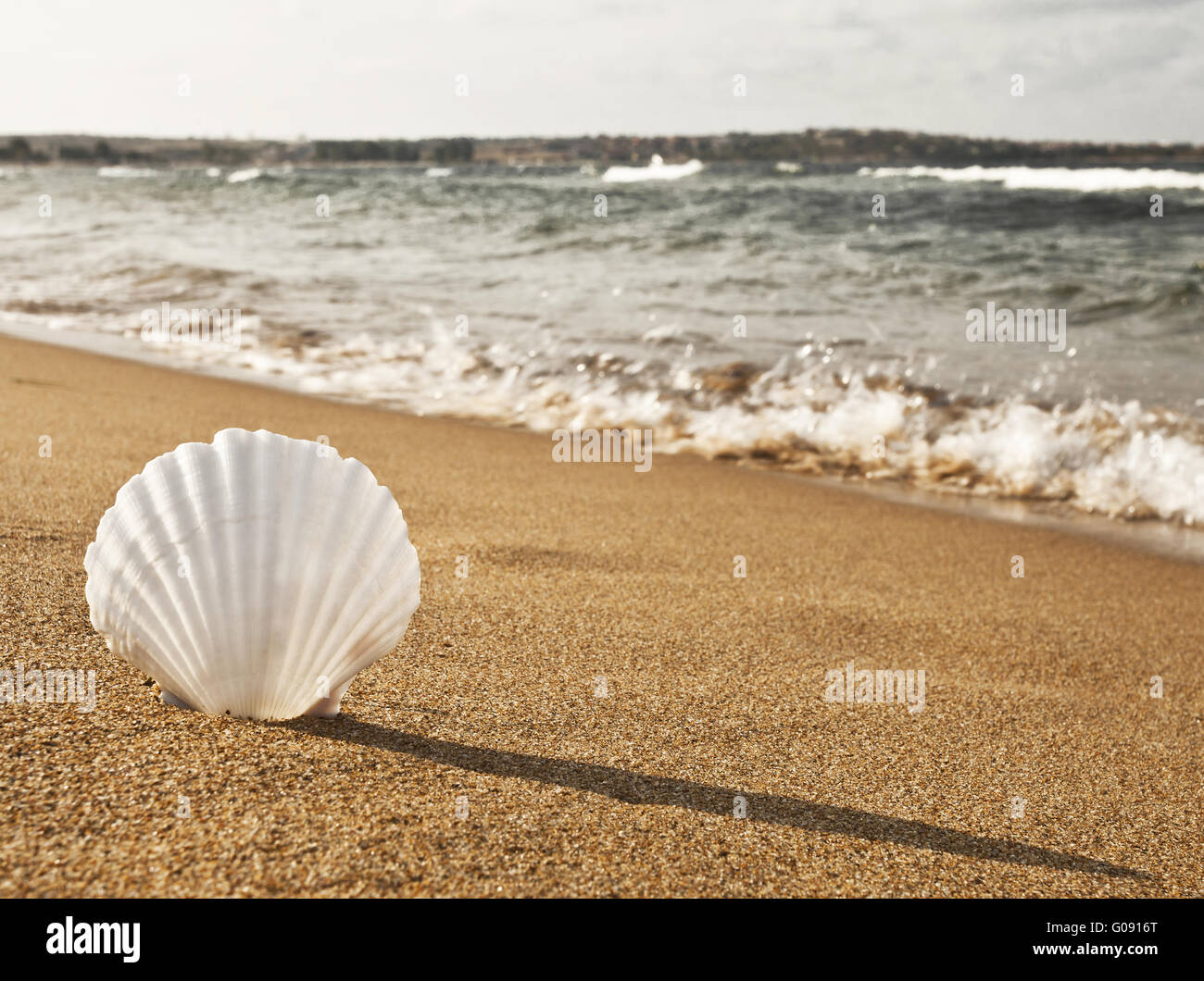 En la playa de Shell Imagen De Stock