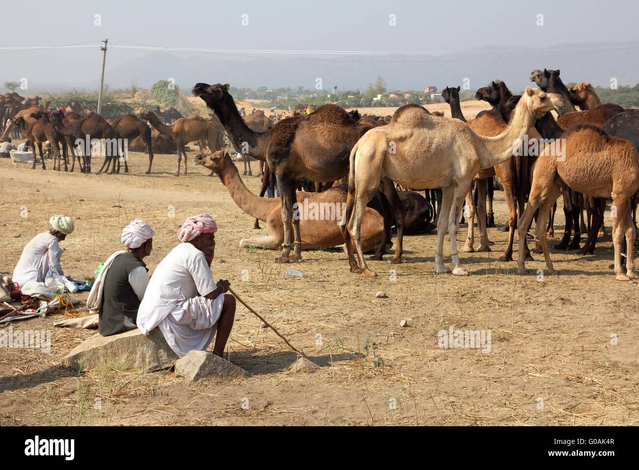 Pushkar Camel Fair - vendedores de camellos durante el festival Imagen De Stock