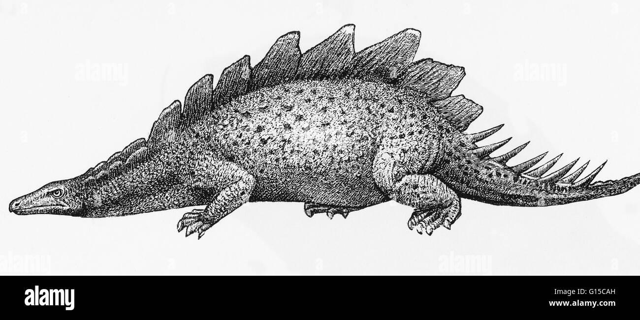 Ilustración de un stegosaurus. Imagen De Stock