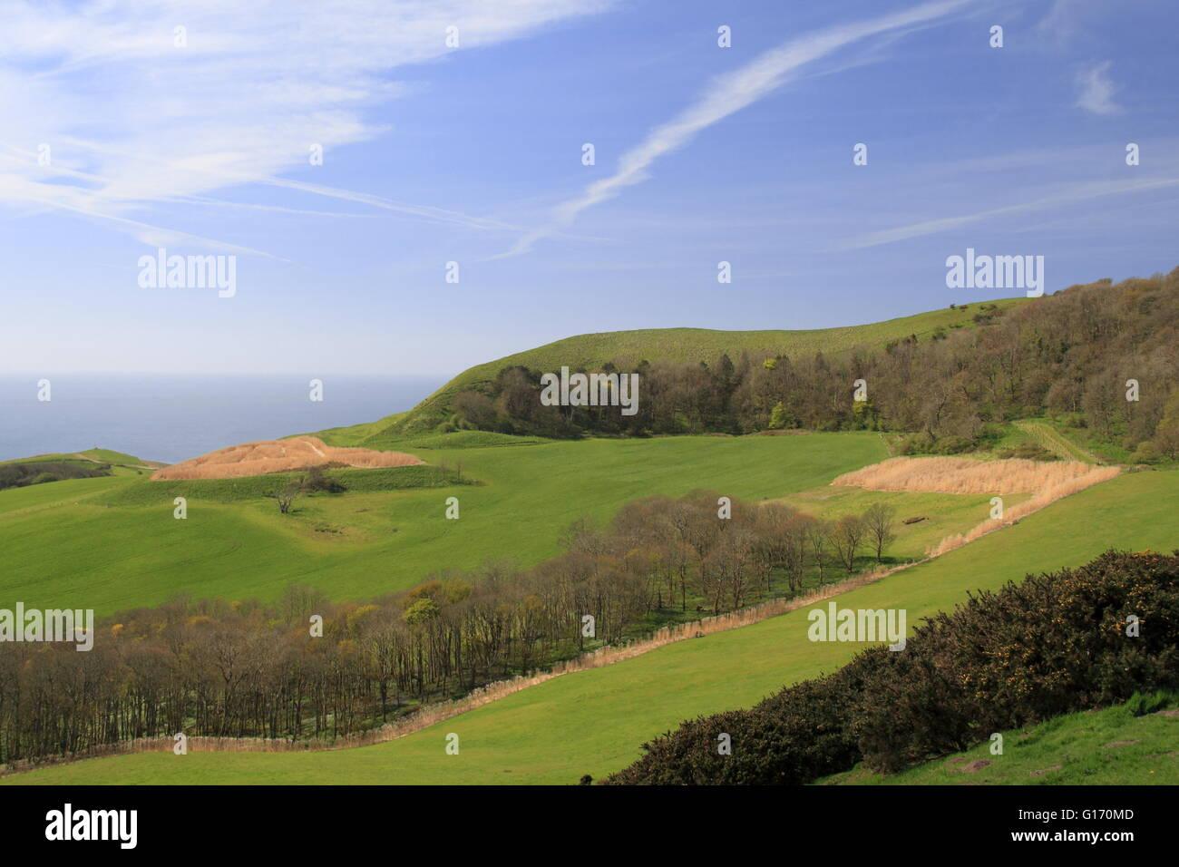 Cabeza de madera Swyre Polar, Kingston, Corfe, Purbeck, Costa Jurásica, en Dorset, Inglaterra, Gran Bretaña, Reino Unido, UK, Europa Foto de stock