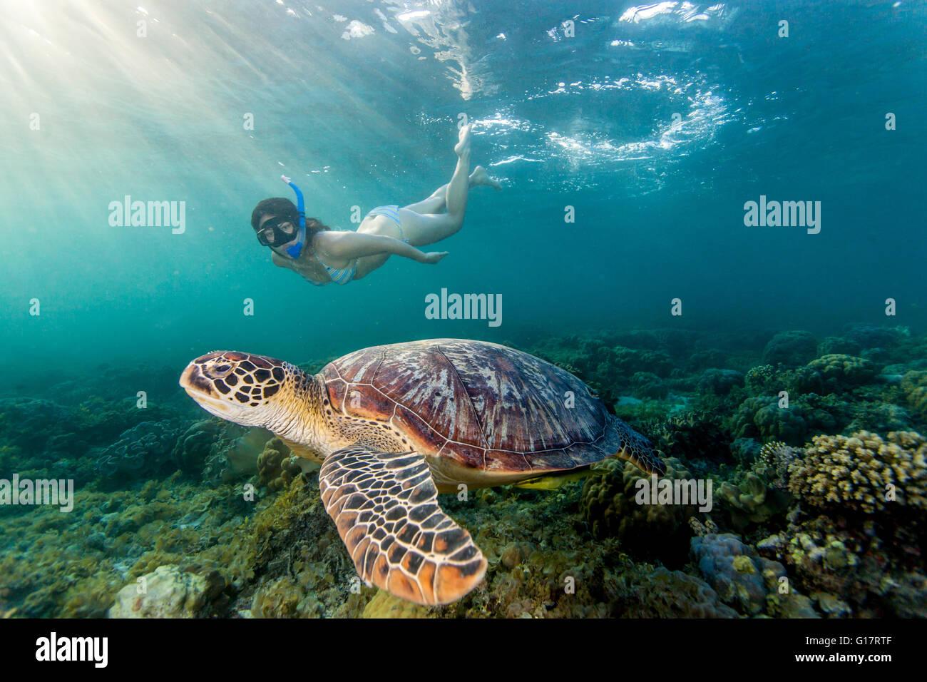Mujer joven natación con rara tortuga verde (Chelonia mydas), Cebú, Filipinas Foto de stock