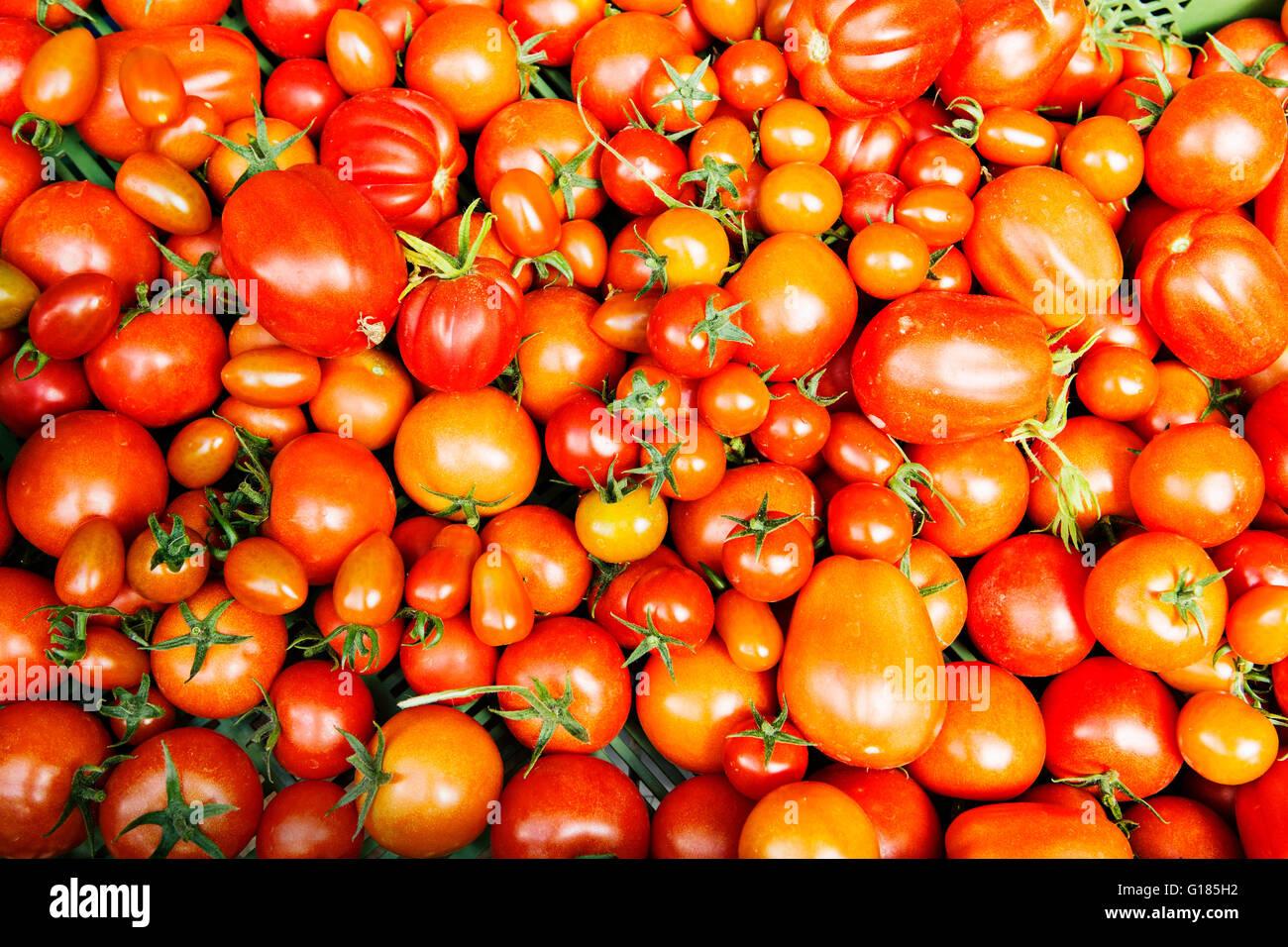 Tomates en varios tamaños Foto de stock