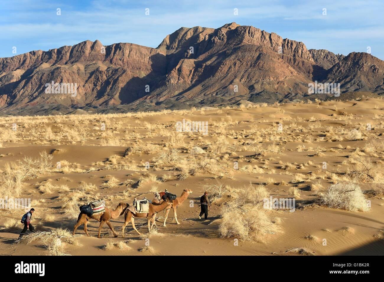 Irán, provincia de Isfahan, Dasht-e Kavir desierto, en Mesr Khur y Biabanak County, tren camello en un camello Imagen De Stock