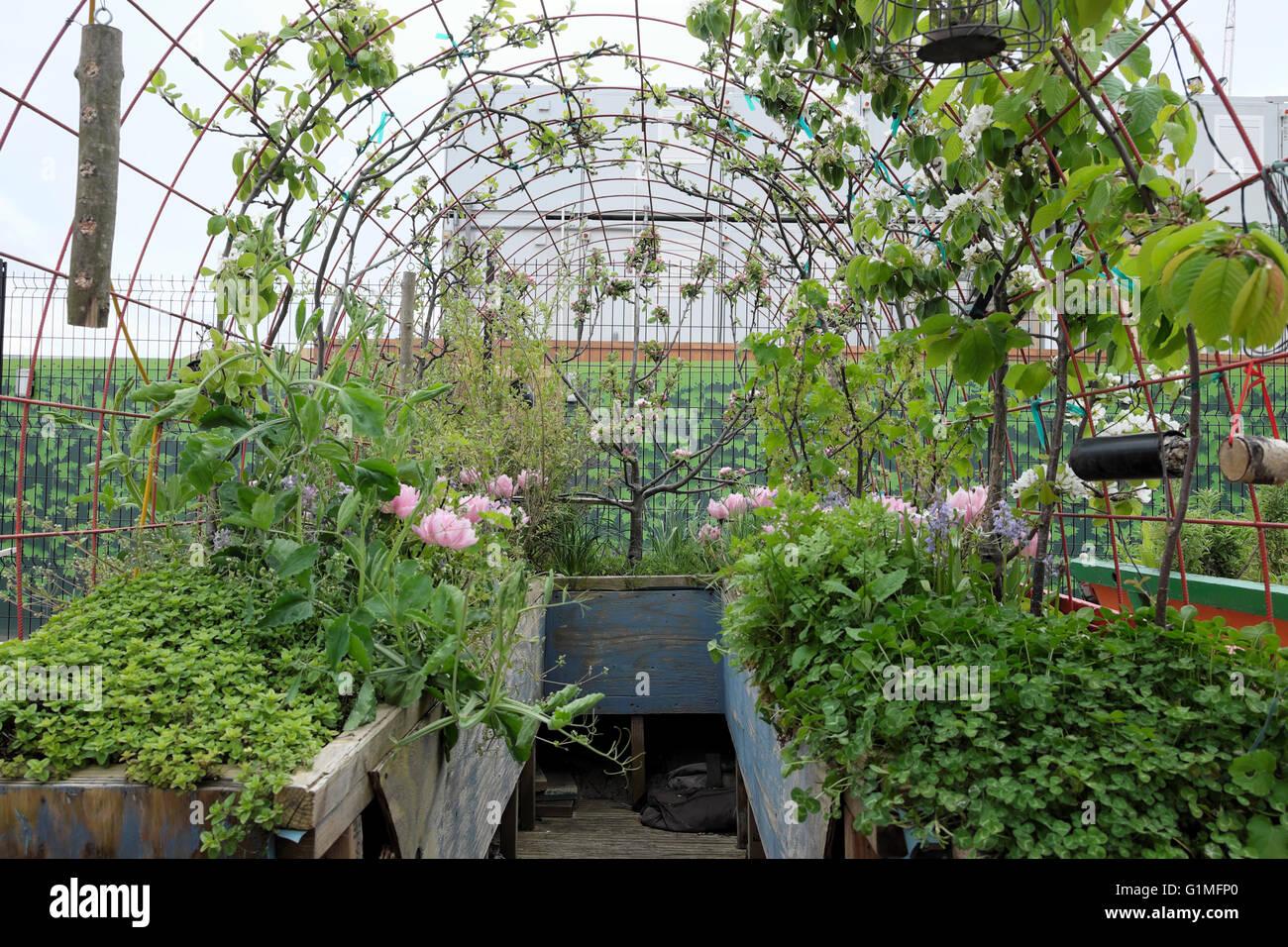 Manzano en flor y rosa tulipanes creciendo en una jaula de alambre arqueada al saltar Jardín en Kings Cross Imagen De Stock