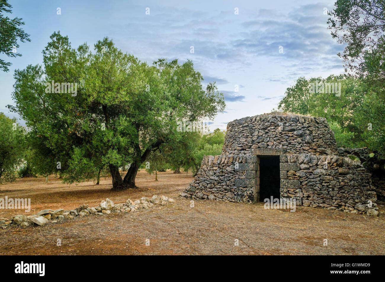 Puglia, antiguo trullo y el olivo Imagen De Stock
