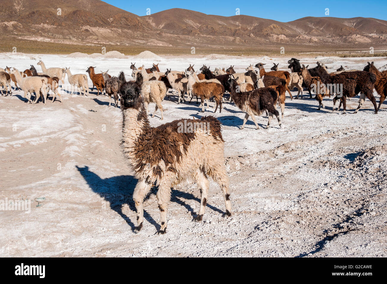 Salt Lake - Salar de Uyuni en Bolivia Imagen De Stock