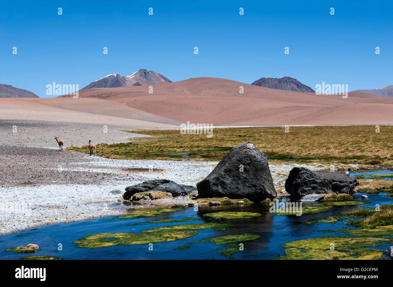 Camino a través de los Andes cerca de Paso Jama, Chile-Argentina-Bolivia. Imagen De Stock