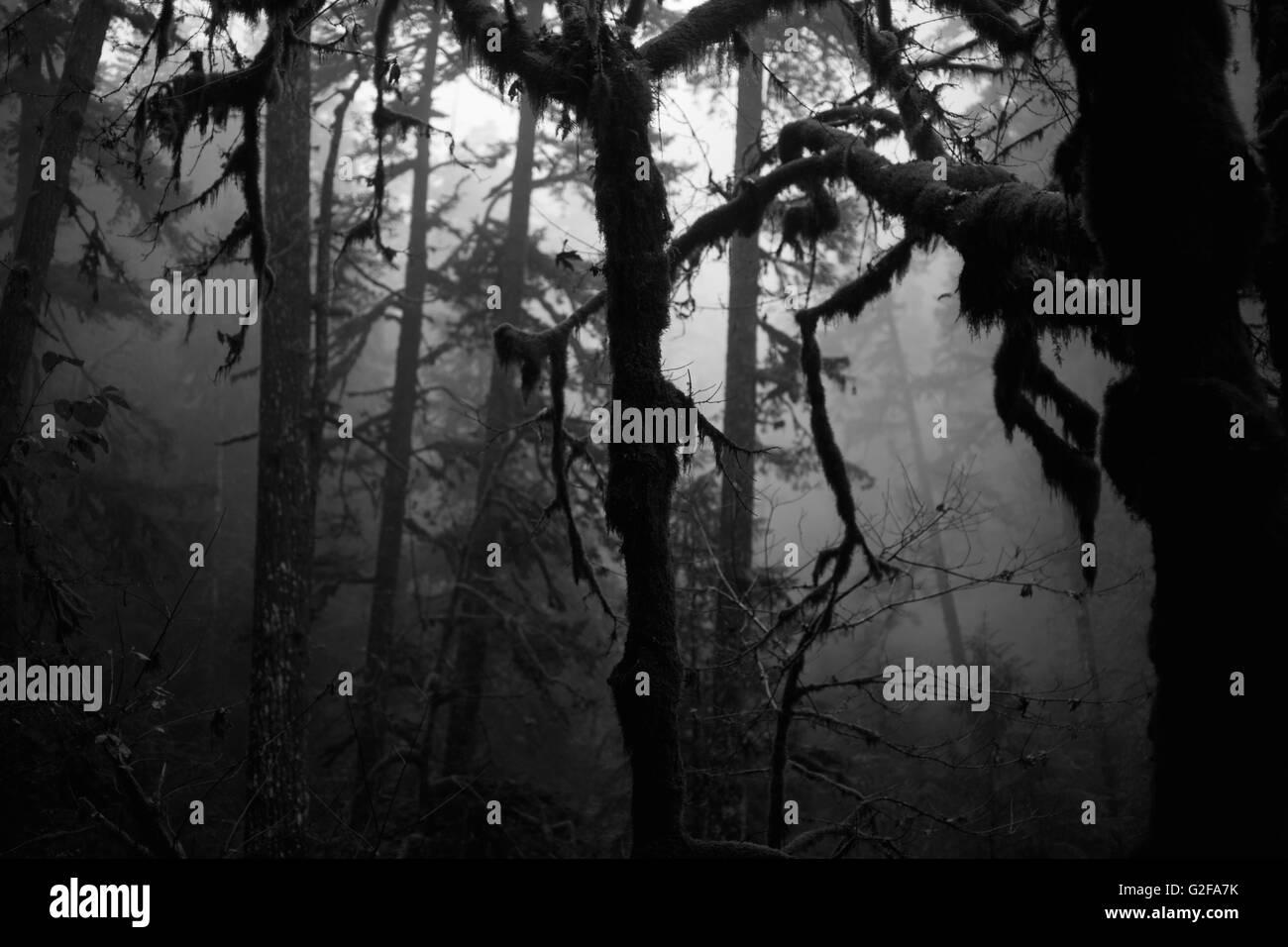 Bosque Misterioso Fotografia De Stock Alamy