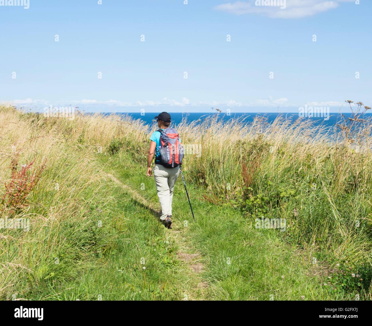 Excursionista femenina sobre la manera de Cleveland National Trail entre Scarborough y Robin Hood's Bay, en la costa Foto de stock
