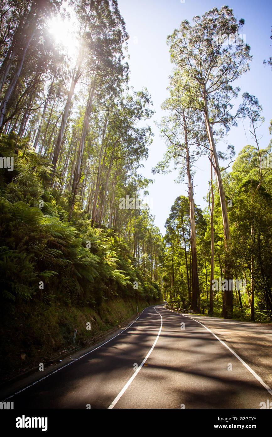 La espuela negra después de incendios forestales Sábado Negro cerca de Healesville, Victoria, Australia Imagen De Stock