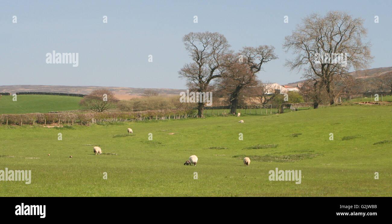 Farndale, Yorkshire Foto de stock
