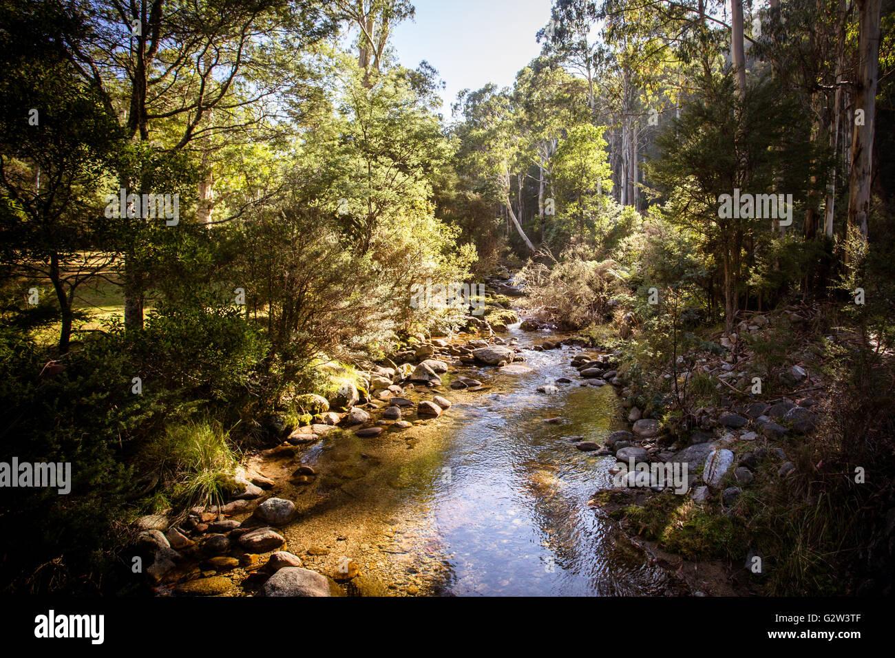 Camisa de cuero Creek cerca de Thredbo, en Nueva Gales del Sur, Australia Foto de stock