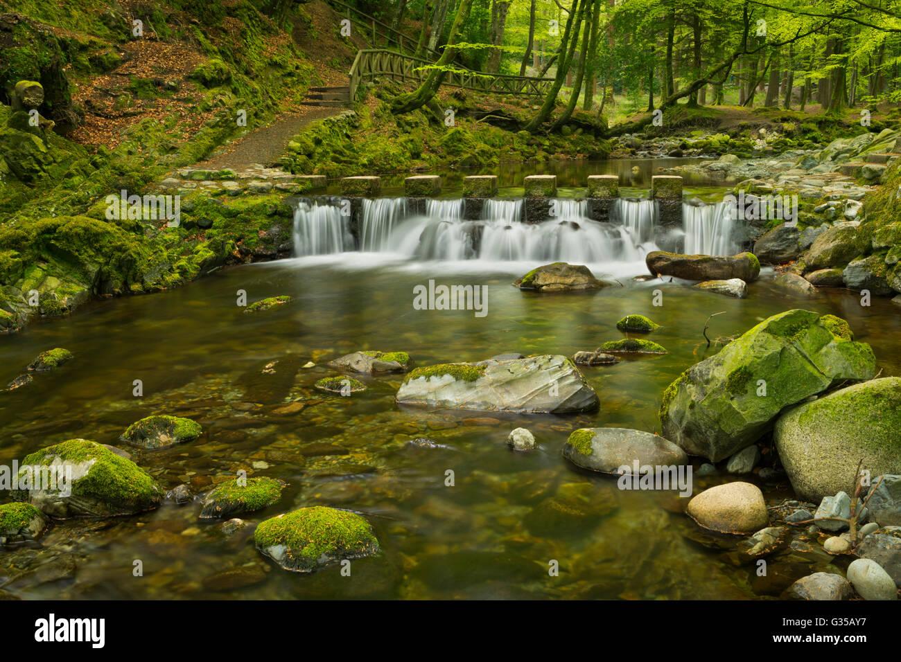 Durante el Shimna Stepping Stones River en Tollymore Park en Irlanda del Norte. Foto de stock
