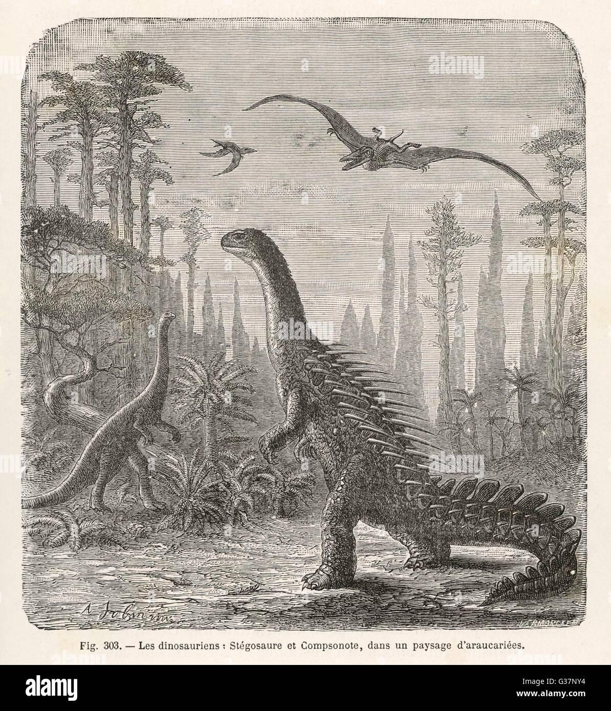 Los dinosaurios del periodo Jurásico : un Stegosaurus, con un Compsognathus en el fondo Imagen De Stock