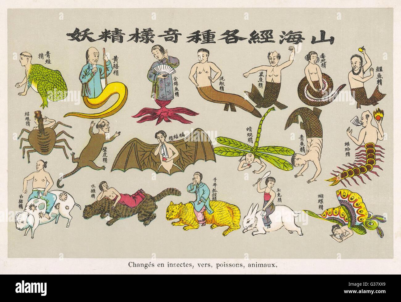 El concepto budista del ciclo de re-nacimiento: el alma es nacido de nuevo como un pájaro, un insecto, un animal(1 Imagen De Stock