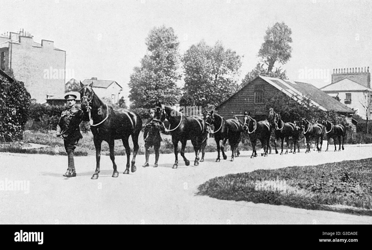 """Un equipo de caballos, conocido como """"El Viejo Negros"""" Fecha: Imagen De Stock"""