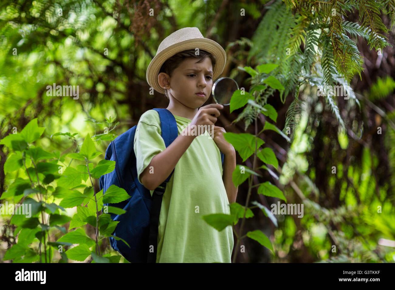 Boy examinando las plantas con lupa Foto de stock