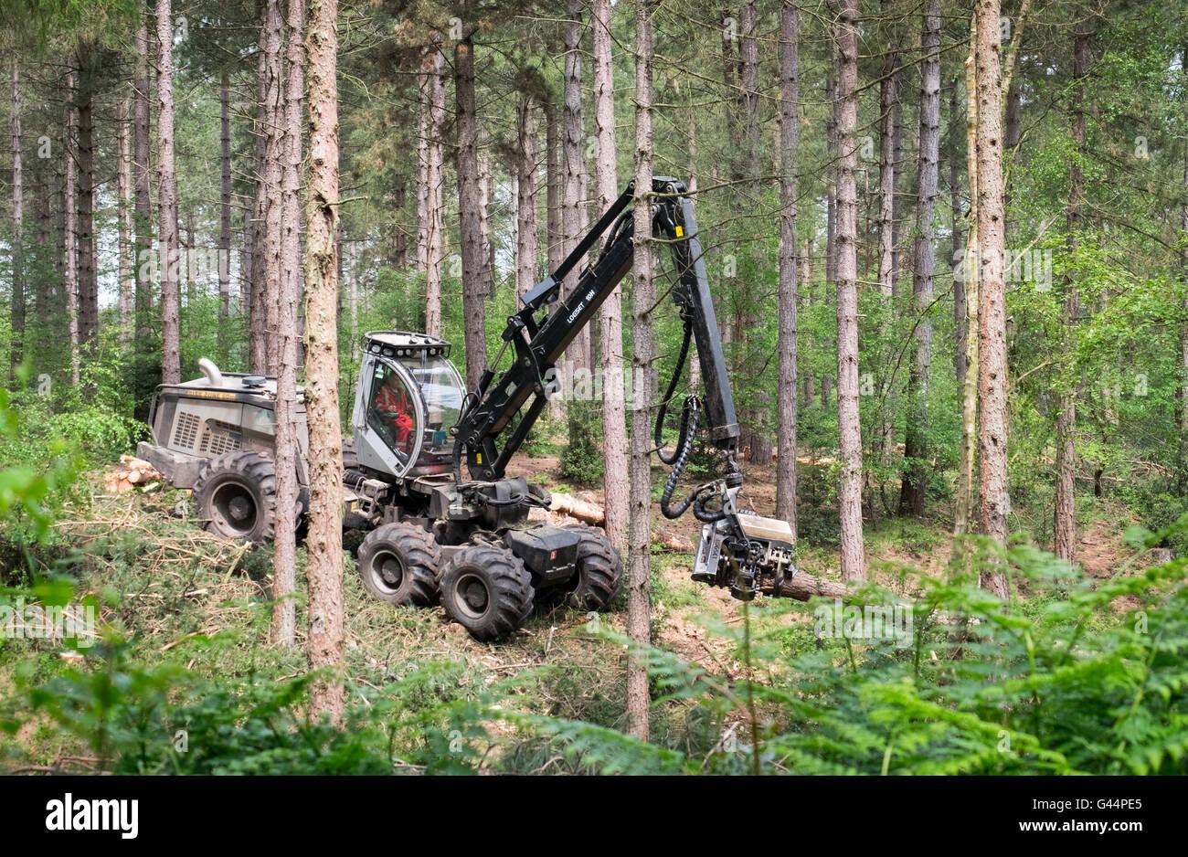 La tala de árboles en el bosque nuevo utilizando una máquina cosechadora Imagen De Stock