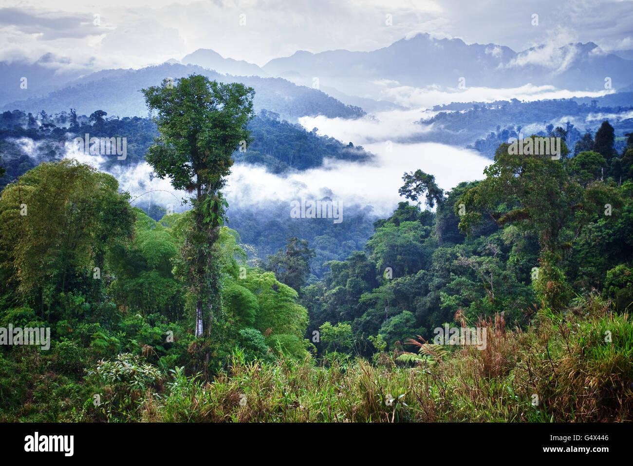 La selva del Amazonas. Ecuador Imagen De Stock