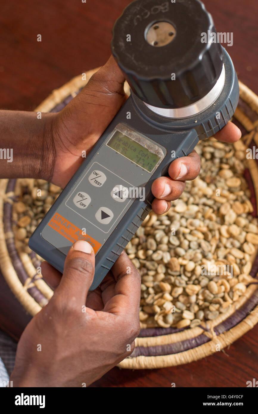 Una muestra de café se mide con un medidor de humedad en un almacén del productor de café en Kasese, Imagen De Stock