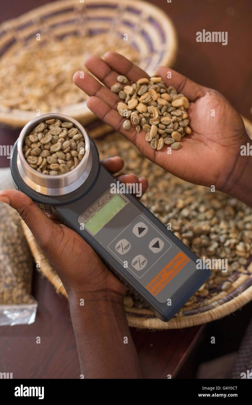 Una muestra de café se mide con un medidor de humedad en un almacén del productor de café en Kasese, Uganda. Foto de stock