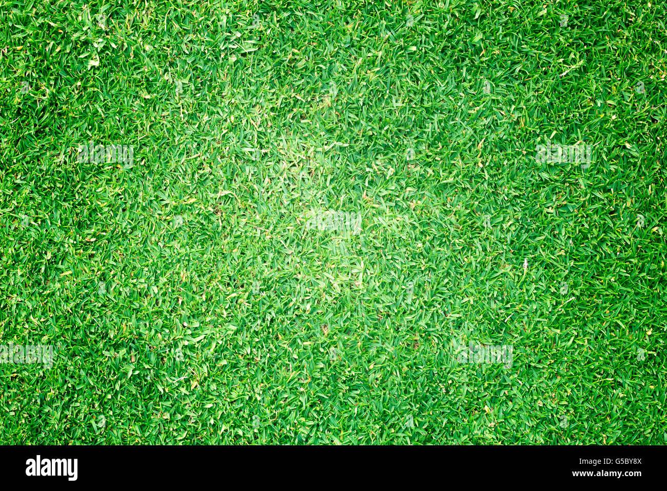 Campos de Golf de césped verde fondo de textura de patrón. Foto de stock
