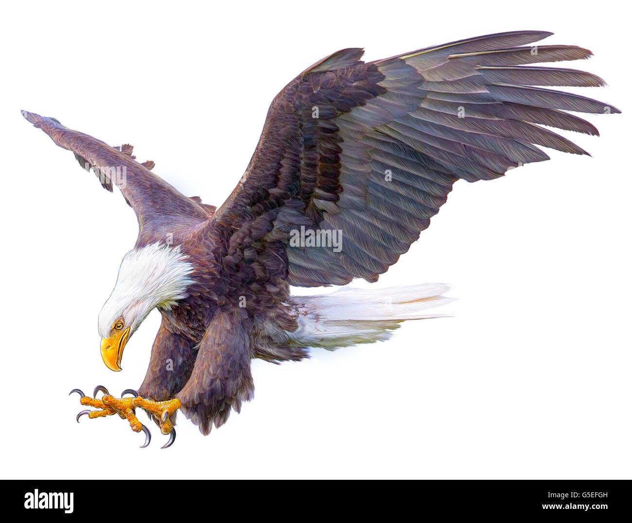 El águila calva swoop mano dibujar y pintar color ilustración sobre ...