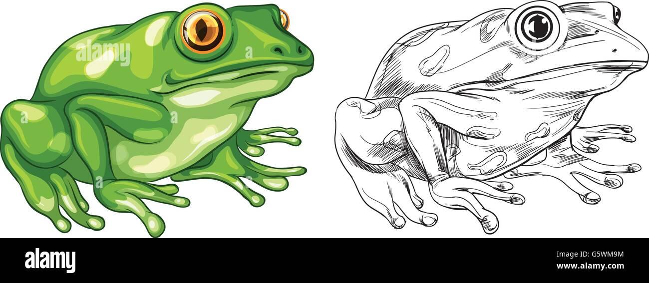 Frog Illustration Imágenes De Stock & Frog Illustration Fotos De ...