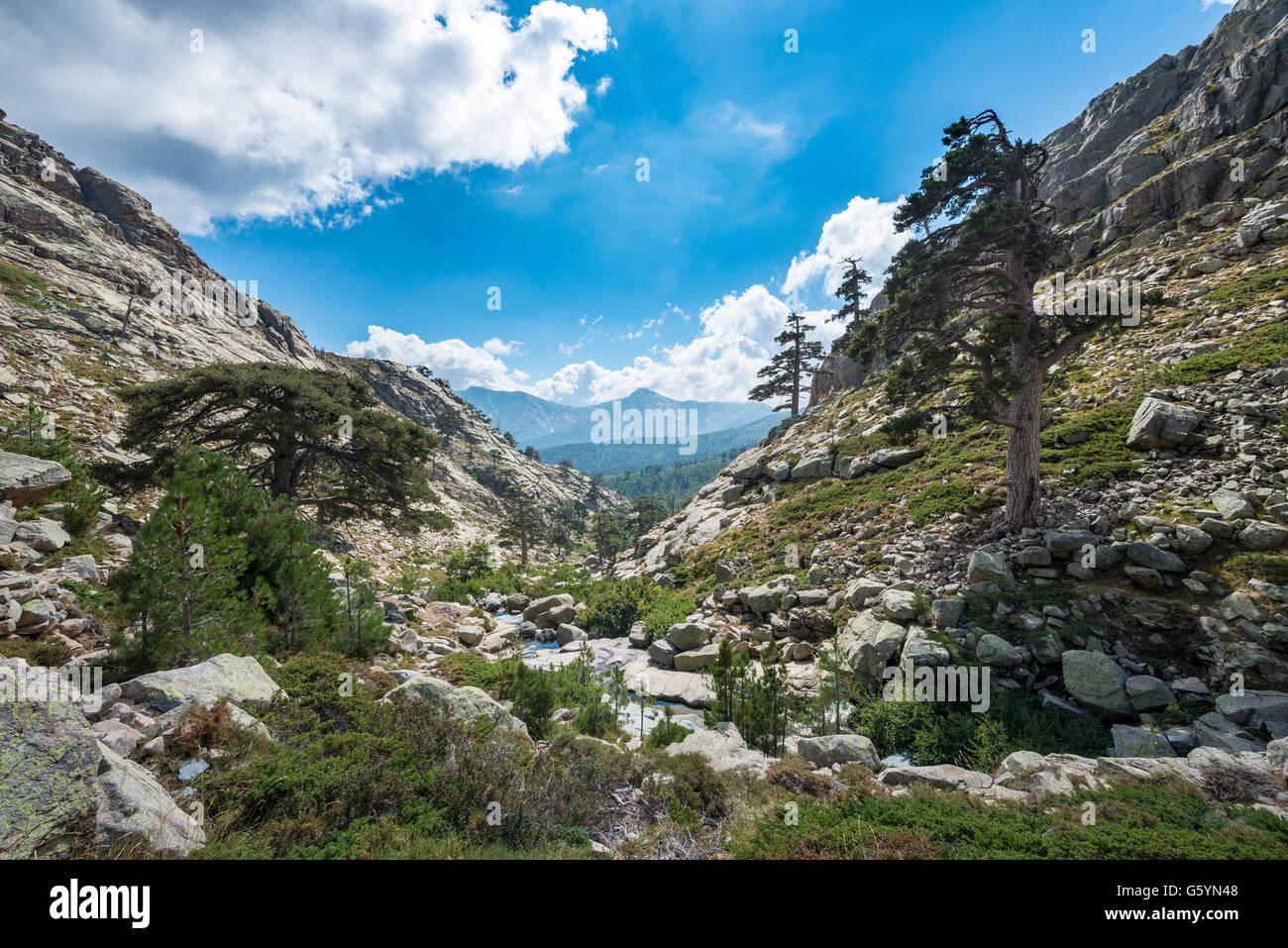Paisaje montañoso en Golo Valley, el Parque Natural de Córcega, Parc naturel régional de Corse, Córcega, Francia Foto de stock