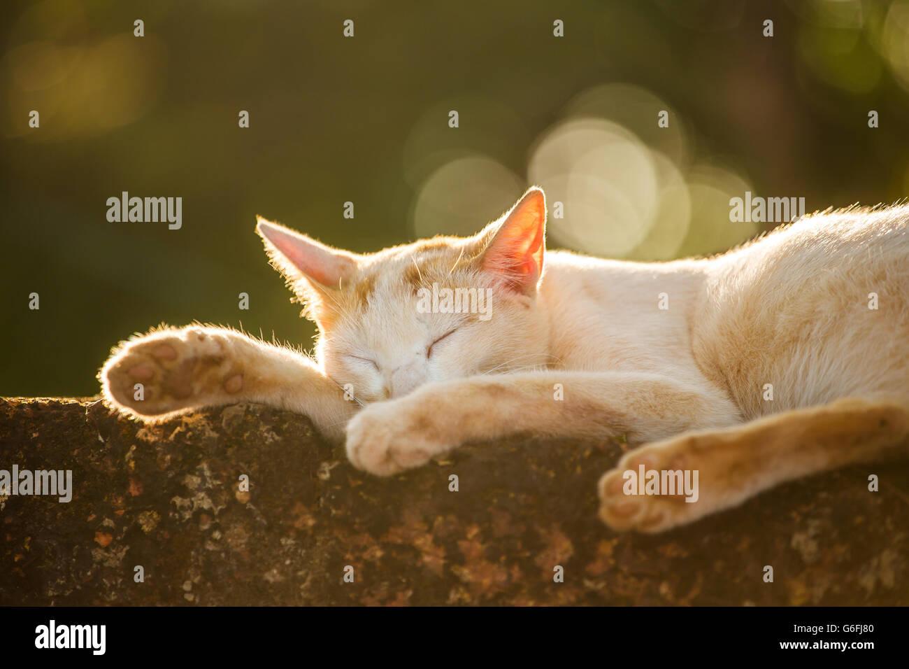Stray cat acostado durmiendo fuera. Rodada en contraluz al atardecer con el bello bokeh. Profundidad de campo. Imagen De Stock