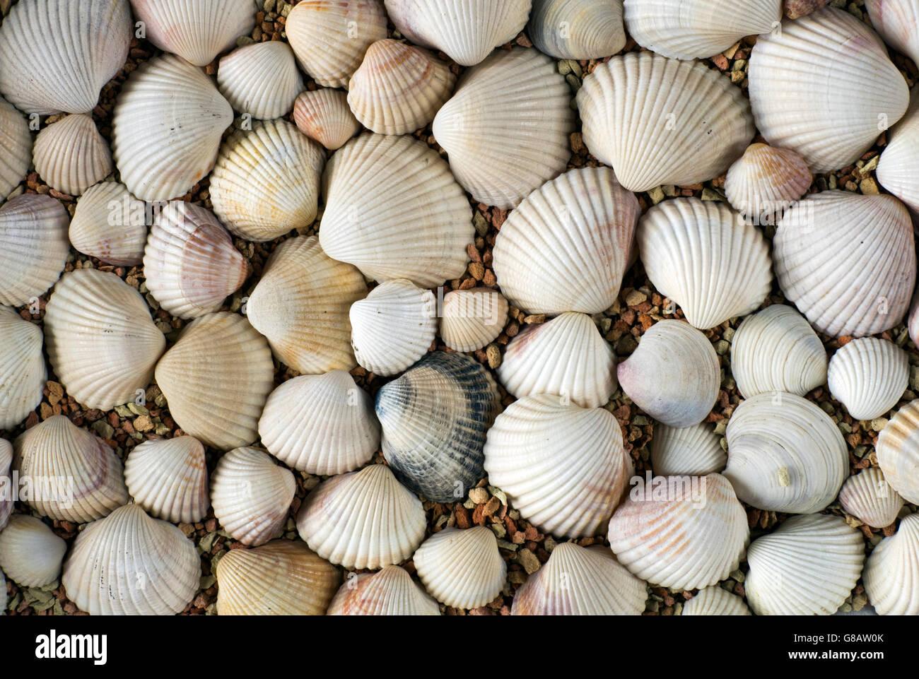 Conchas en la playa Imagen De Stock