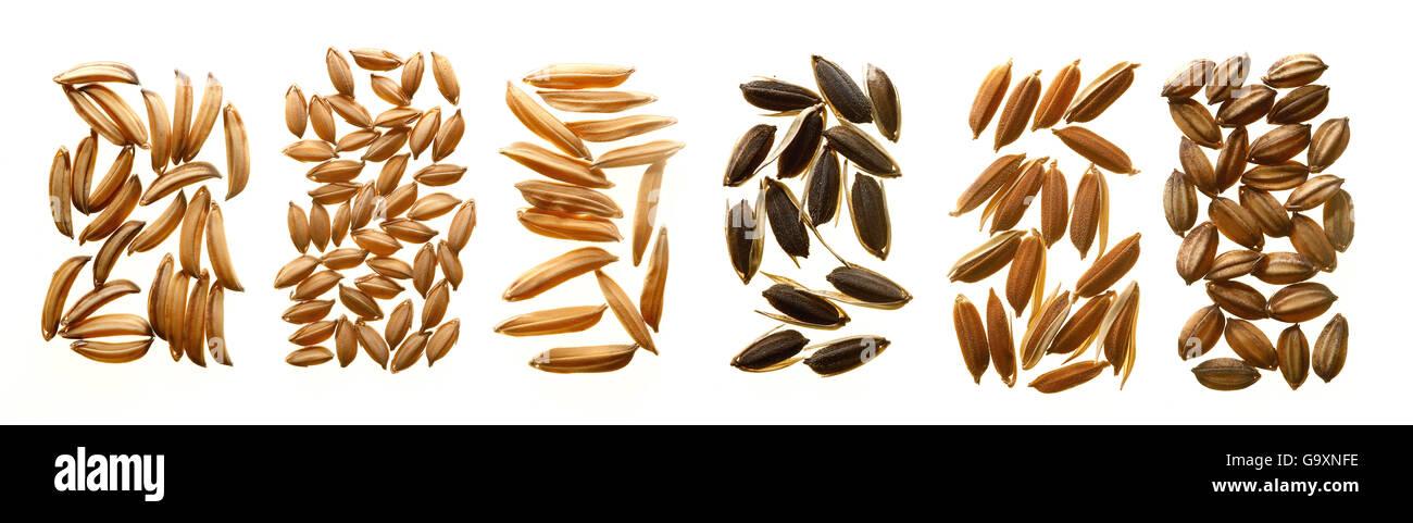 Diferentes variedades de semillas de arroz, que muestra la variación de la morfología de la forma y el Imagen De Stock
