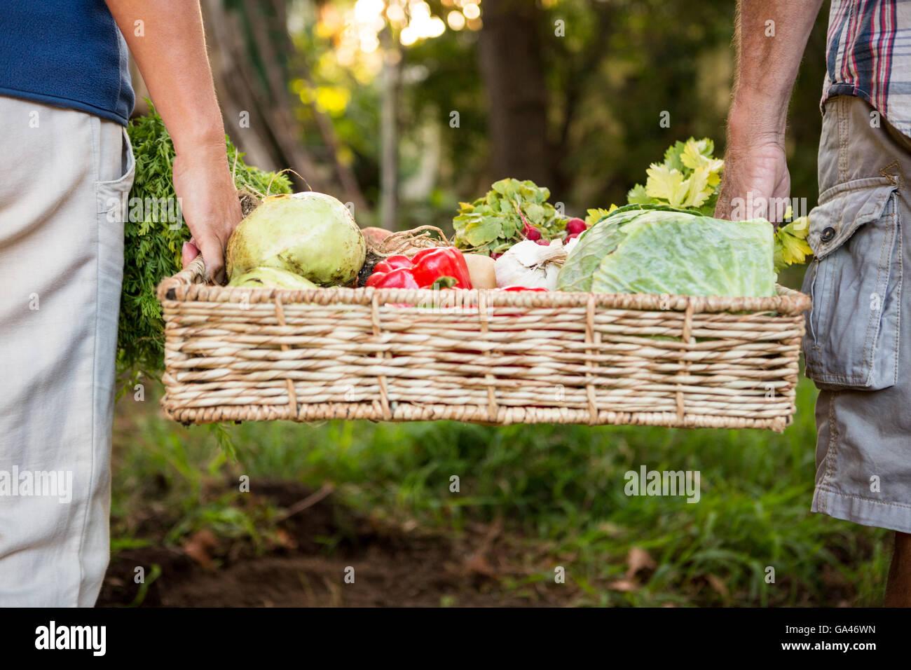 Sección media de la colega llevar hortalizas crate en el jardín Imagen De Stock