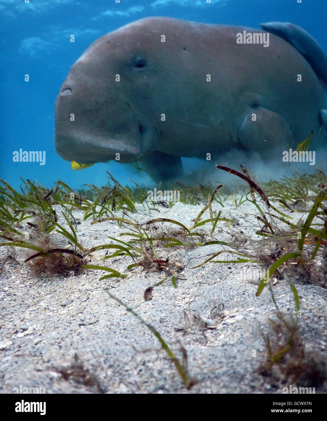 La vida subacuática Marsa Mubarak Foto de stock