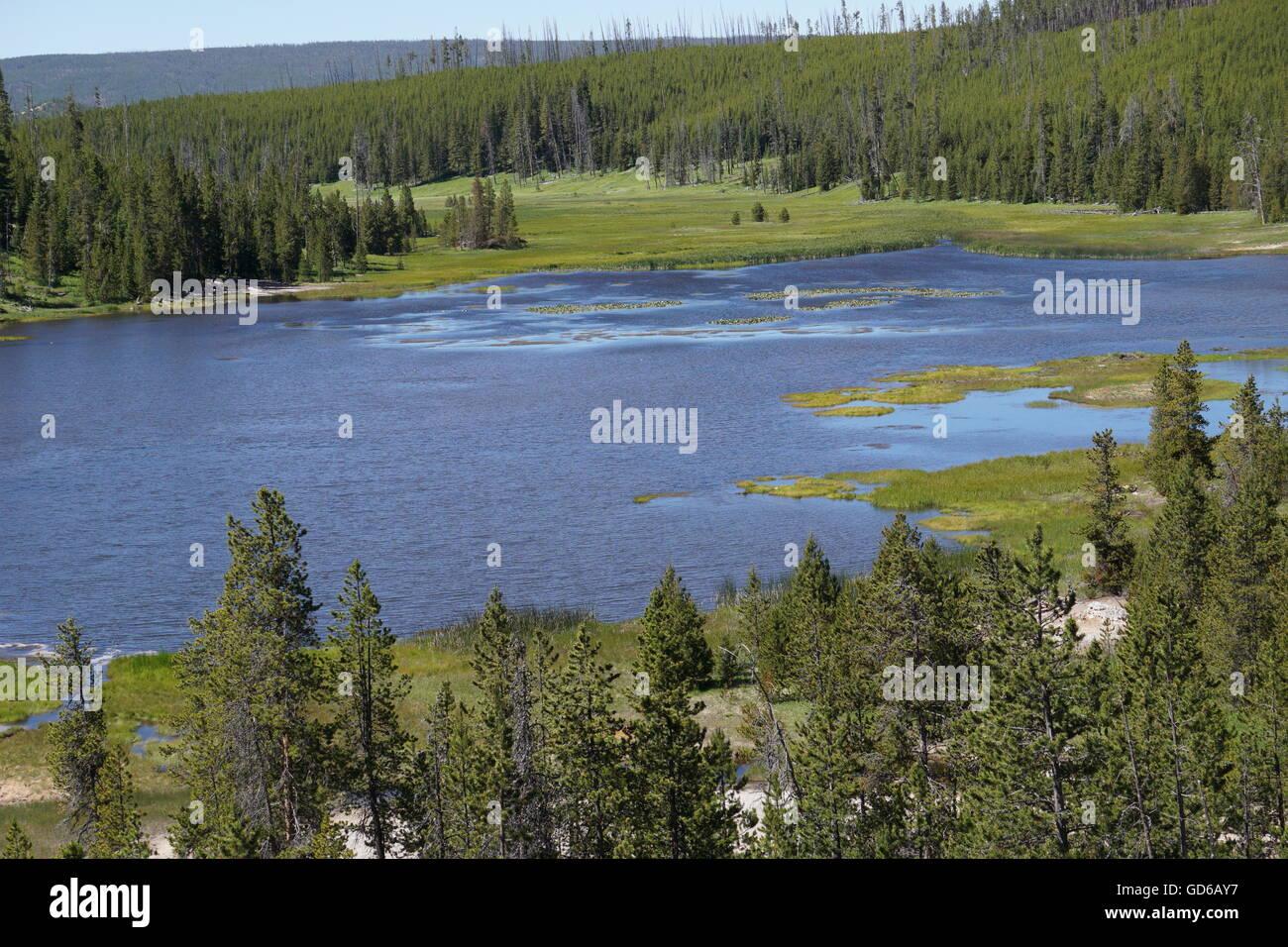 Lago de montaña con lirios de agua amarilla, el Parque Nacional de Yellowstone. Foto de stock