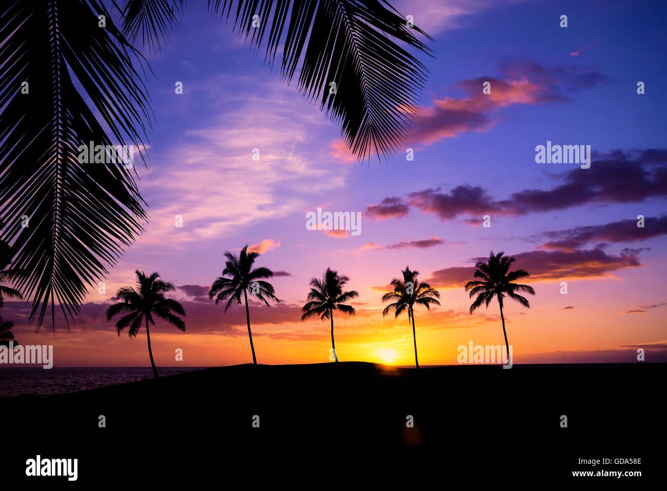 Sunset hawaiano enmarcadas con hojas de palmera Foto & Imagen De ...
