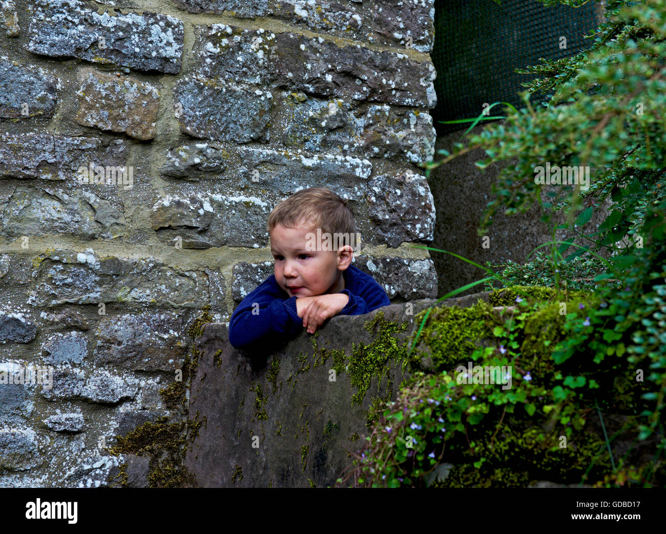 Dos años de edad se inclina sobre una pared Foto de stock