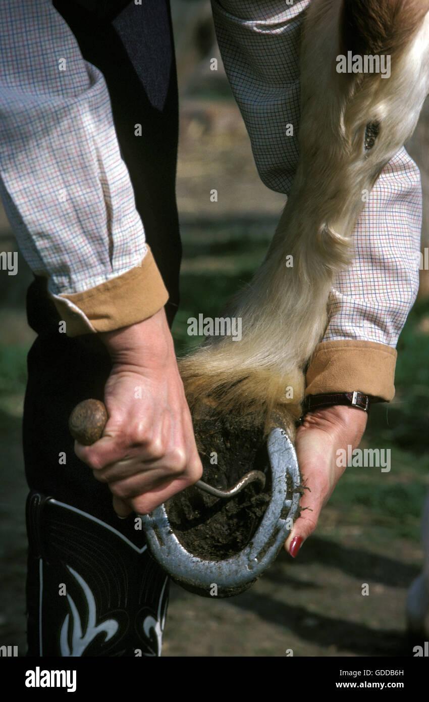Mujer sacando el pie del caballo Imagen De Stock