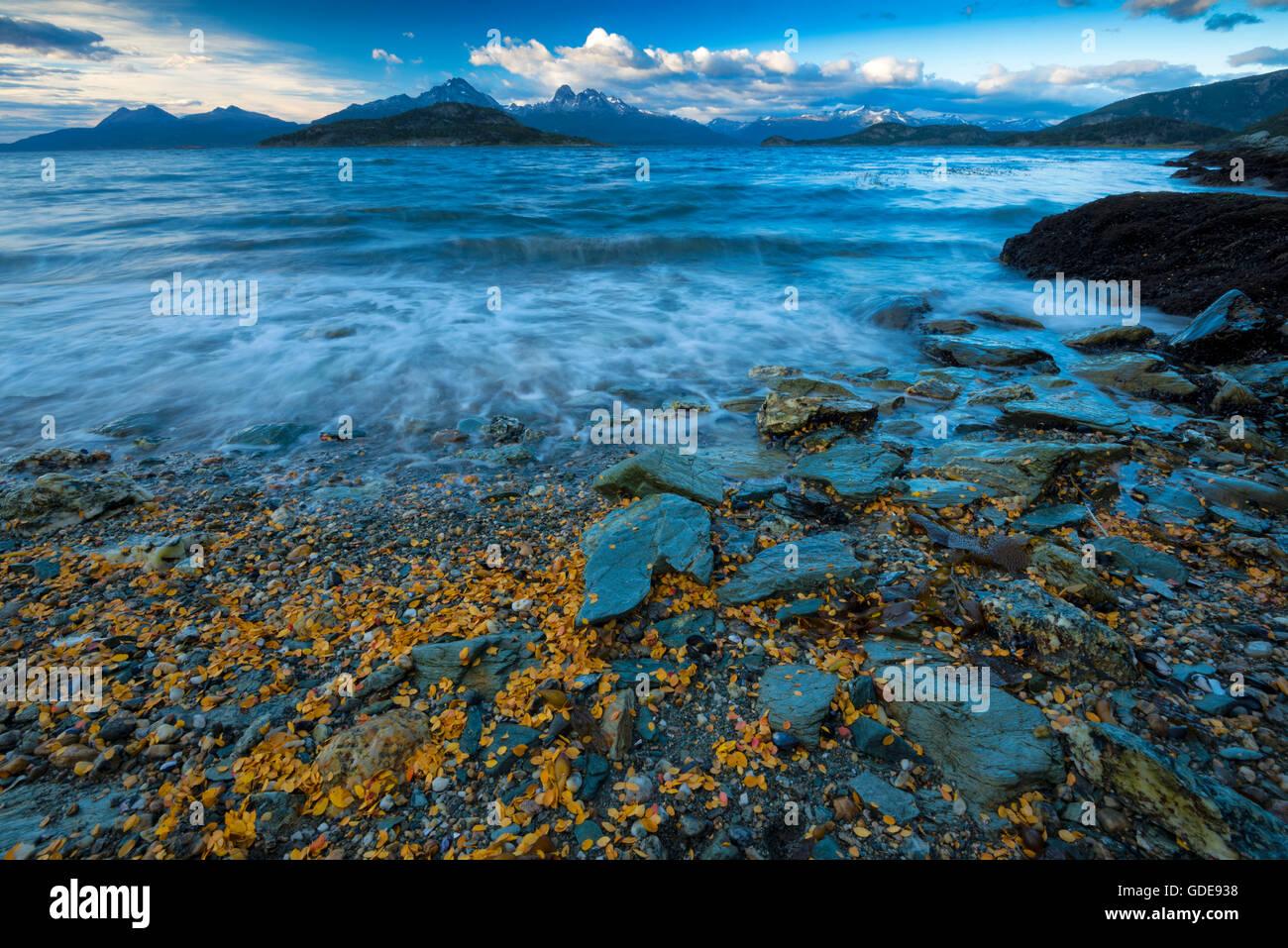 América del Sur,Tierra del Fuego,Argentina,Ushuaia,Tierra del Fuego,Parque Nacional,Canal Beagle Imagen De Stock