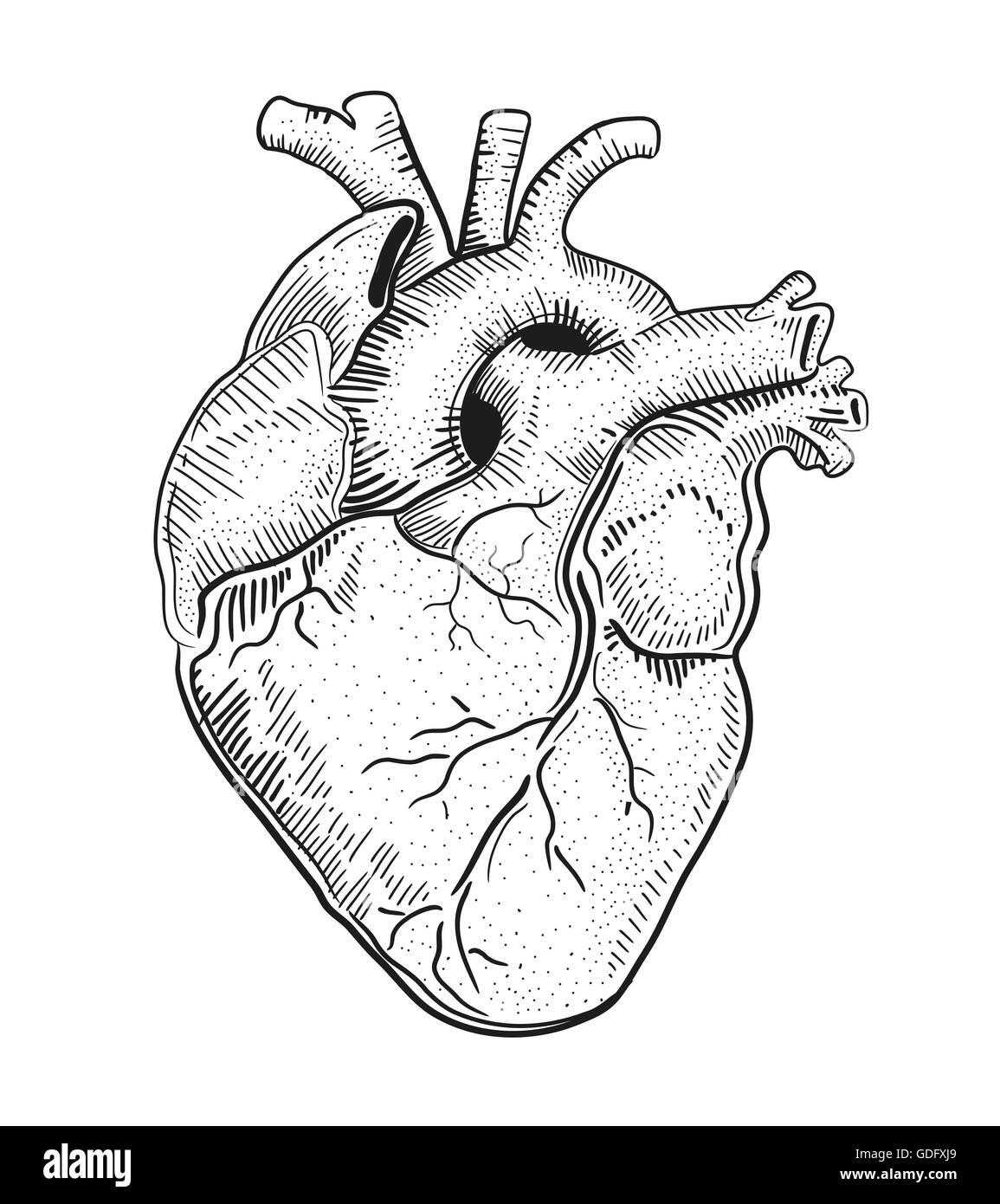 Ilustración Dibujada A Mano O Un Dibujo De Un Corazón Humano Foto