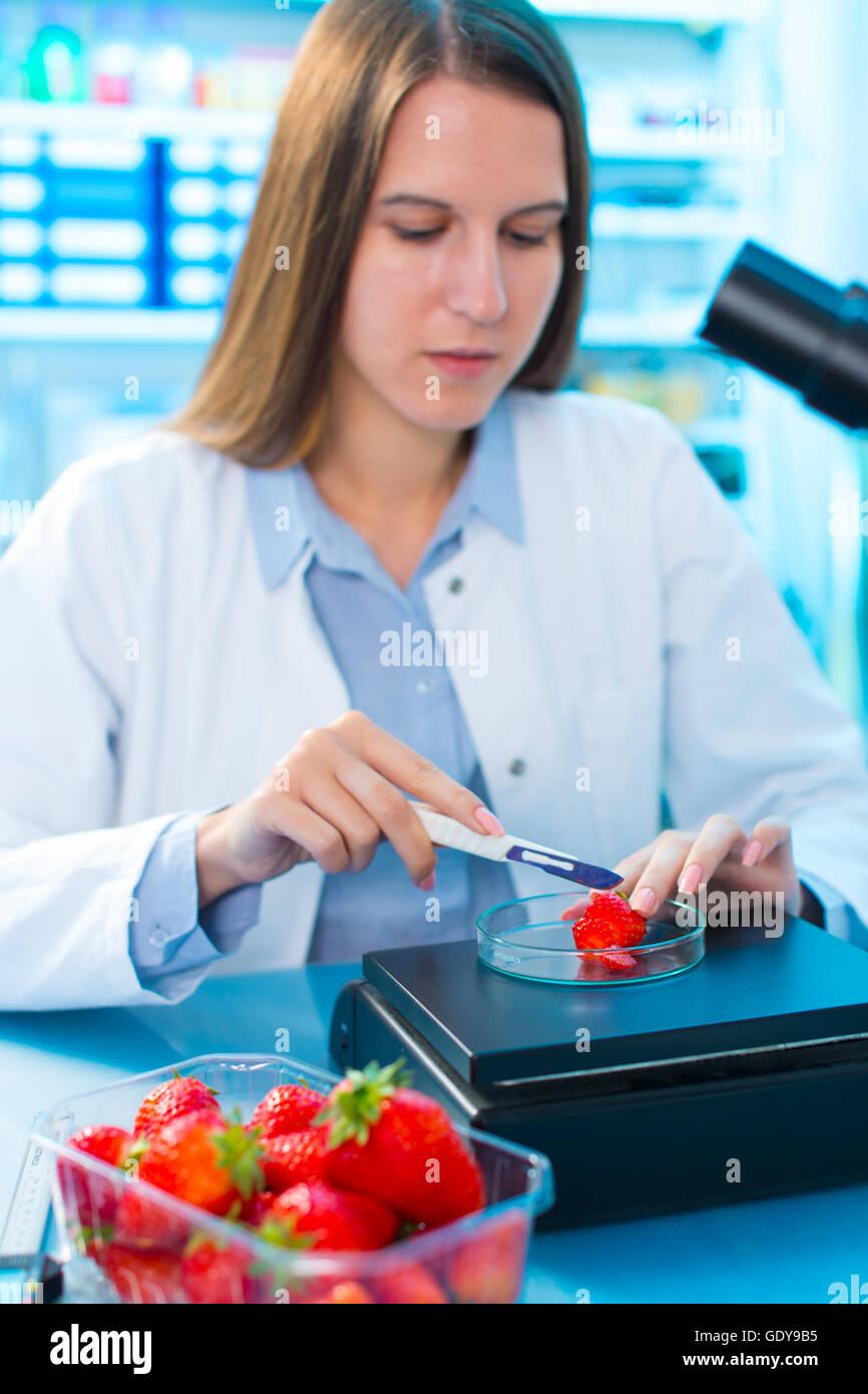 Control de alimentos las fresas, sobre el contenido de los herbicidas y pesticidas Imagen De Stock