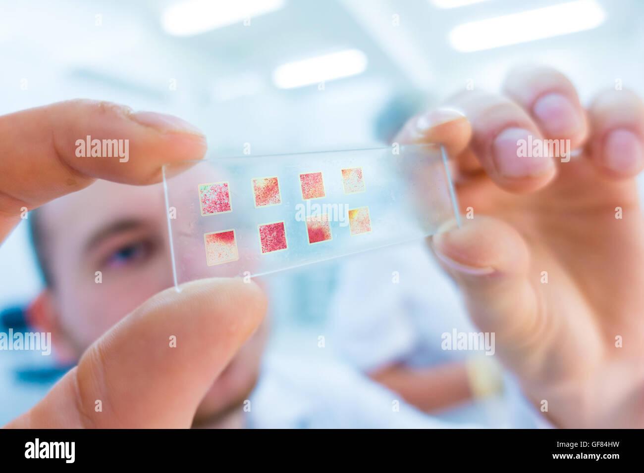 Close-up de científico manos con portaobjetos de microscopio, examinando muestras Imagen De Stock