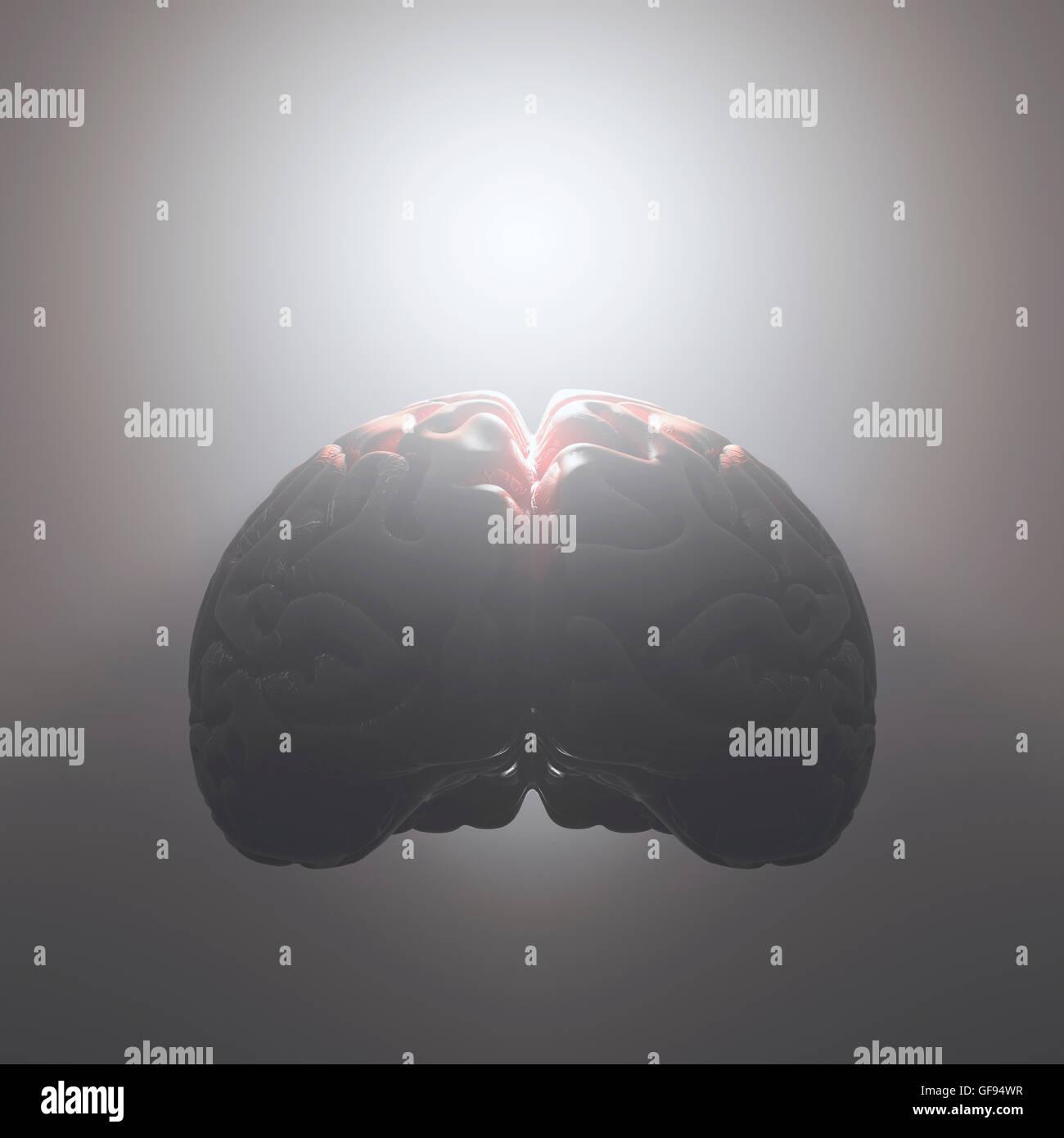 Cerebro Humano contra un fondo gris, ilustración. Imagen De Stock