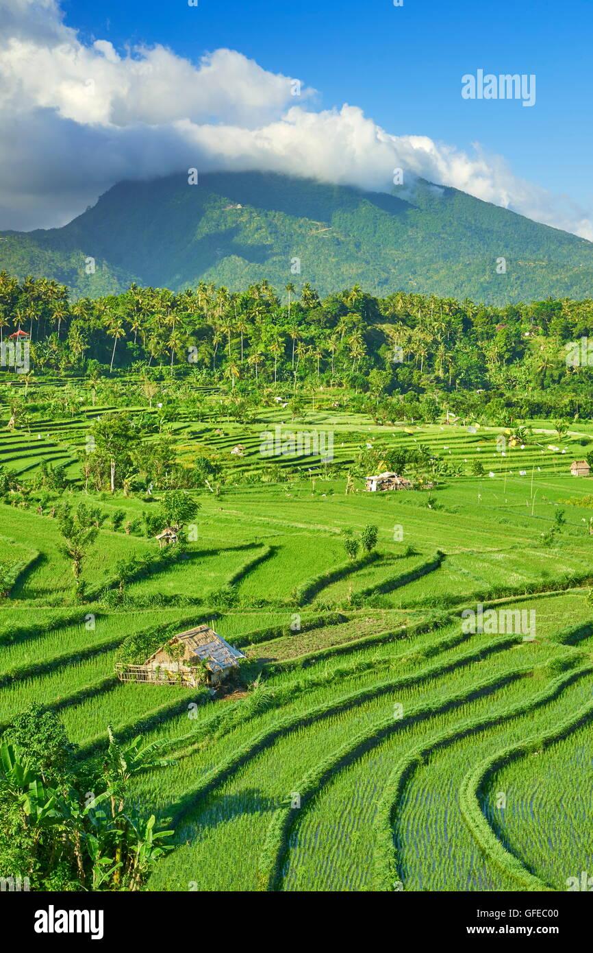 Terrazas de arroz y paisaje de campo, Bali, Indonesia Imagen De Stock
