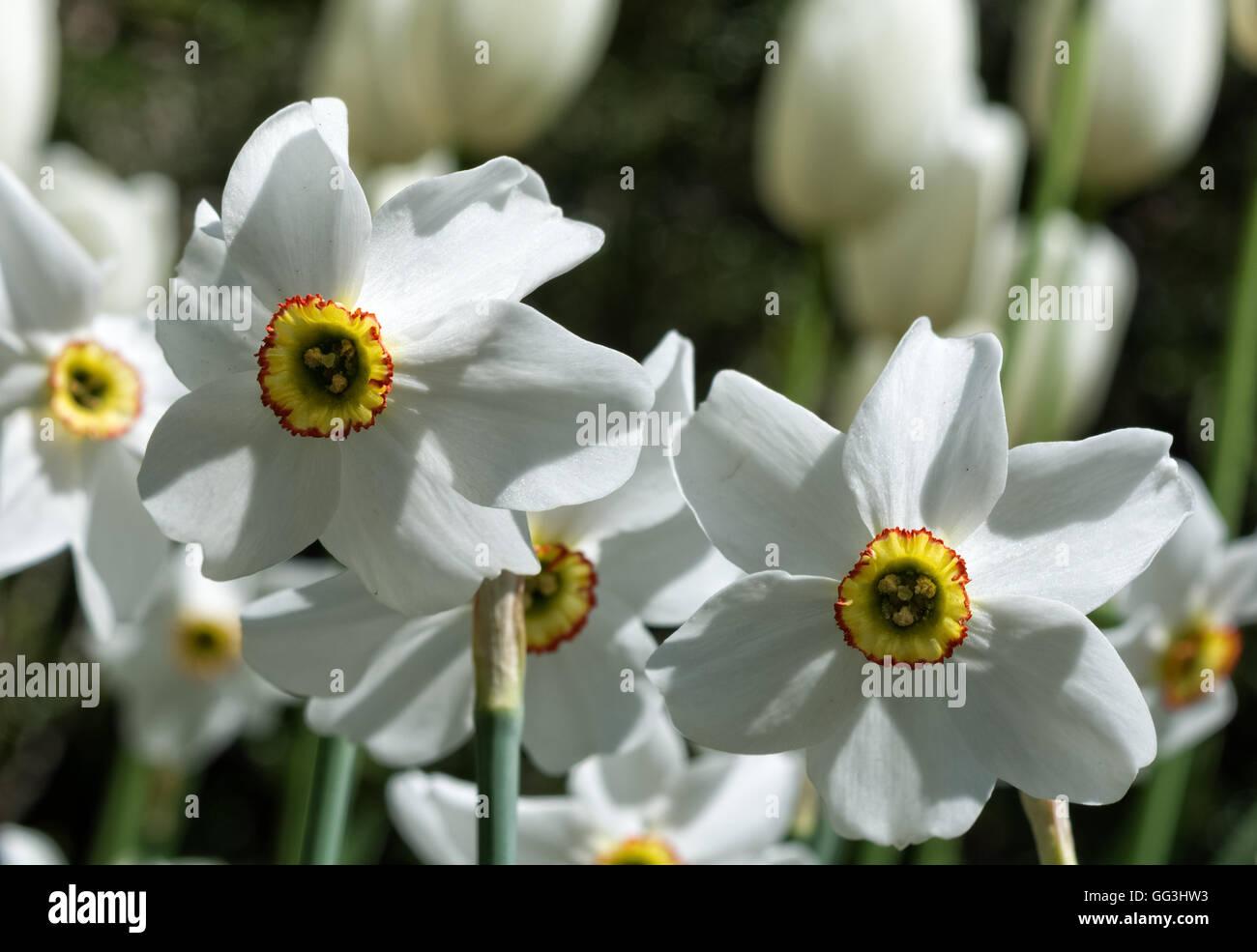White Petal Fringe Imágenes De Stock & White Petal Fringe Fotos De ...