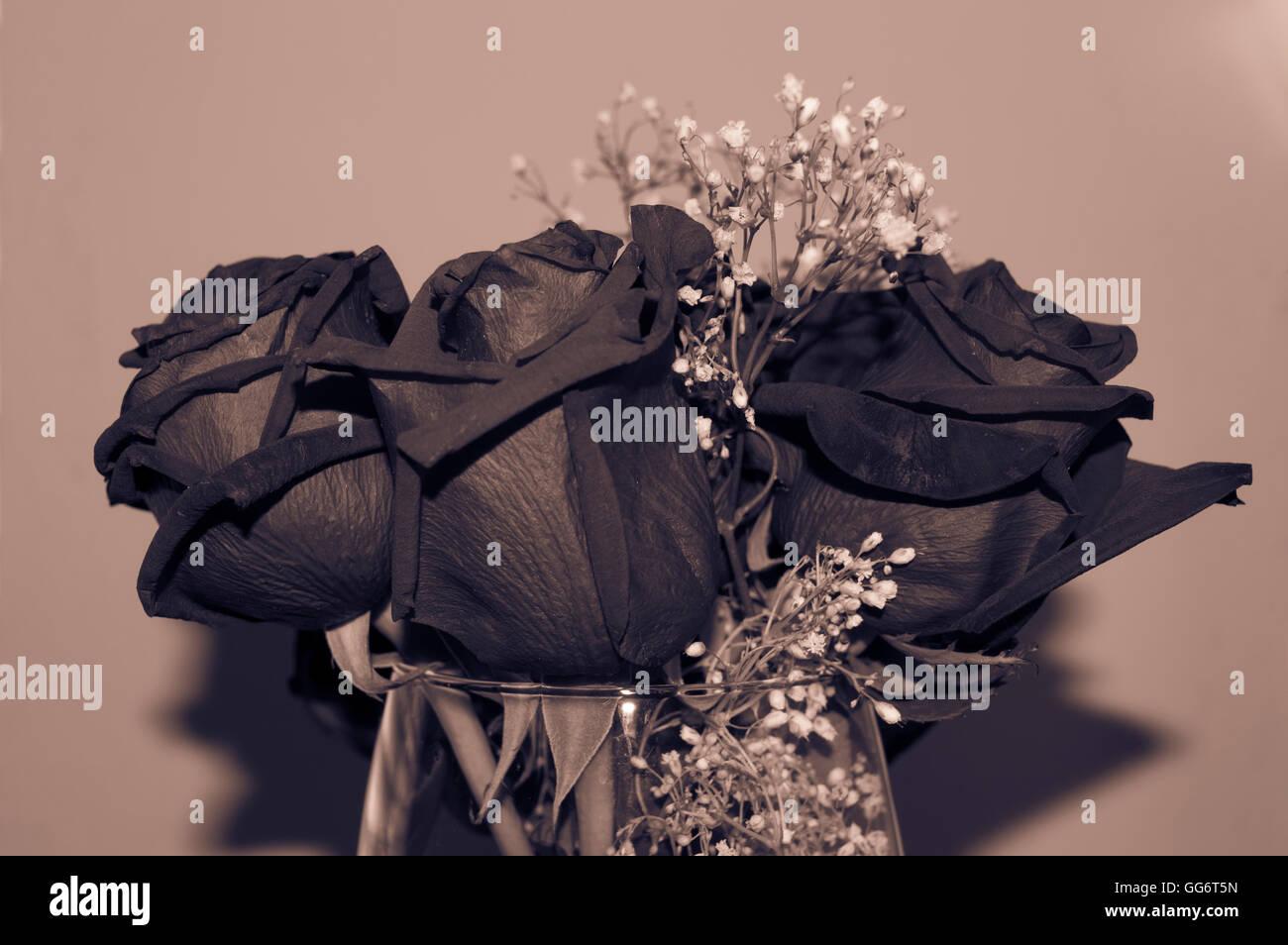 Rosas Imagen De Stock