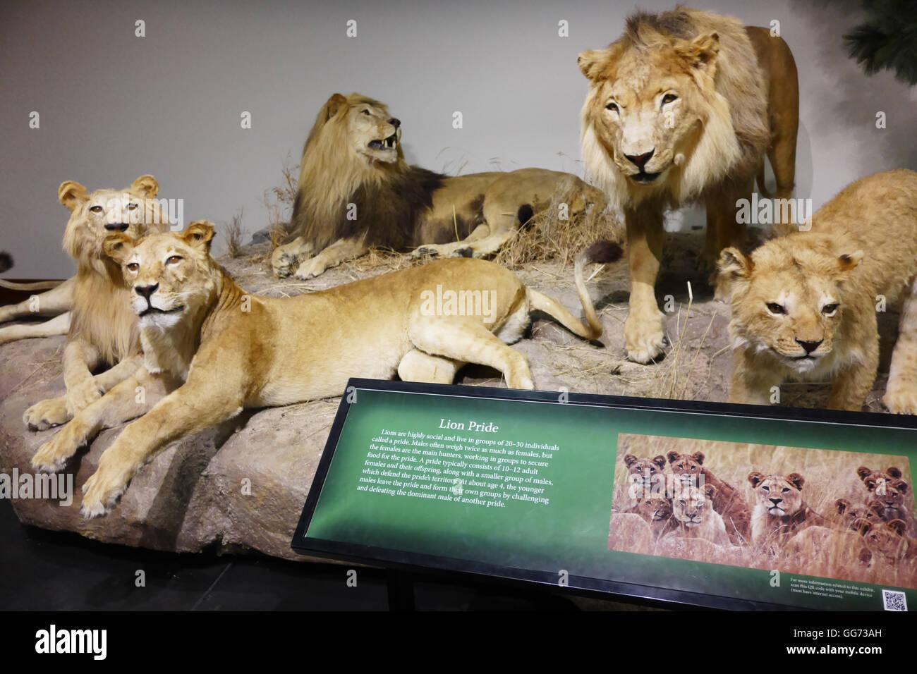 L Zoology Imágenes De Stock & L Zoology Fotos De Stock - Alamy